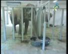 النظافة في عالم الحيوان  (شركاء في البرية)