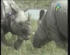وحيد القرن  (عالم الحيوان الغامض)