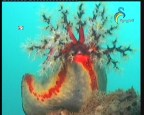 الحلقة 1 (الحدائق البحرية)