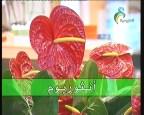 نباتات 3 (نباتات الزينة)