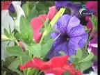 نباتات 4 (نباتات الزينة)