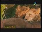 حيوانات افريقيا (عالم مثير)