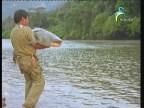 الاسماك (المزارع السمكية)