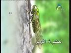 الحياة علي الحشرات (عالم الحشرات)
