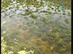 البراري ( براري نهر الدانوب)