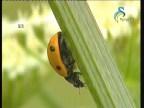 الحشرات (عالم الكائنات الصغيرة)