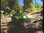 الحشرات  2 (عالم الكائنات الصغيرة)