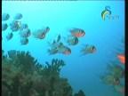 الحلقة 3 (الحدائق البحرية)