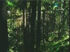 نشيد الأدغال 2 (الغابة الصينية)