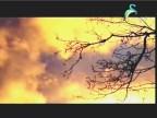 البراكين البوليزنيه (الكوكب الغامض)