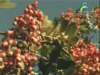 الحلقة 6 (النباتات الاسترالية)