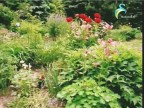 الحلقة السابعة  (عالم الحدائق الخقي)