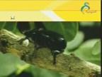 الحلقة 7 (عالم الحشرات)