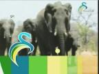 الحلقة 2 (مسيرة الفيلة)