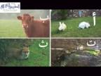 نشيد اسماء الحيوانات