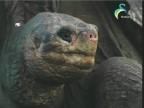 الحلقة 31 (عالم الحيوان الغامض)