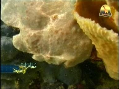تنكرات الأسماك (مغامرات في الطبيعة)