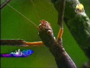 غرائب الحشرات (غرائب في الطبيعة)