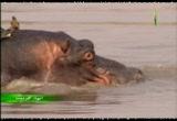 3- نهر لونجوا (انهار افريقيا)