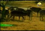 3- محمية زامبيزي (اروع المحميات)