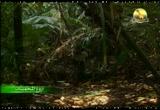 6- وحيد قرن جاوة (أروع المحميات)
