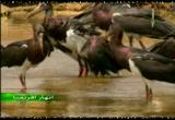 8- نهر البديات (انهار افريقيا)