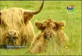 4- اسكوتلندا (مجطات عالمية)