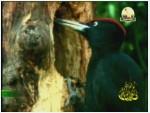2-  غابة إيراتي (محميات طبيعية)