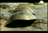 5- حدائق البحر الأصفر (محميات طبيعية)