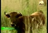 6- بارديناس رياليس (محميات طبيعية)