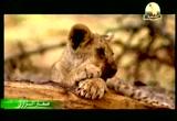 8- أداب الطعام (صغار البراري)