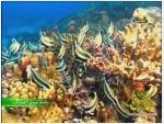 5- اسرار الشعب المرجانية (رحلة تروي العجائب)