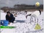 12- طائر الكركي (رحلة تروي العجائب)