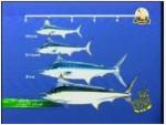 3- ماليزيا (صيادو السمك)