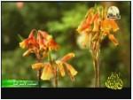 1- عالم النباتات (النباتات الاسترالية)