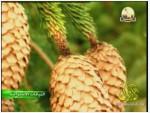 3- عالم الشجيرات (النباتات الأسترالية)