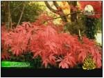 4- عالم الاشجار (النباتات الإسترالية)