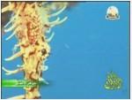 4- مخلوقات من عالم المرجان (جواهر الأعماق)