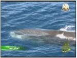 11- حيوانات البحار والمحيطات (العالم المثير)