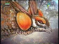 النسور العملاقة(عالم الحيوان الغامض)