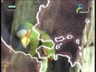 رحلة الطيور عبر الصحراء(عالم الحيوان الغامض)