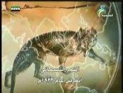النمر السيبيري المخادع(من براري الشرق)