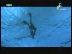 الحيتان  2(عالم الحيوان الغامض)