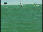 بحيرة جوهرة الغرب (جولة عالمية)