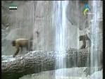 الذئب ماغورايت(من براري الشرق)