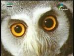البصر(العين الشاهدة)
