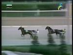 المسابقات(حكايات الخيول)