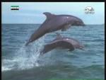 الدلافين الغامضة(وقائع غامضة)