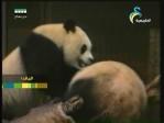 العناية بالحيوانات(في حديقة الحيوان)