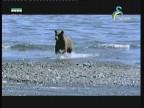 ممالك الساحل(الحياة البرية في اسيا)